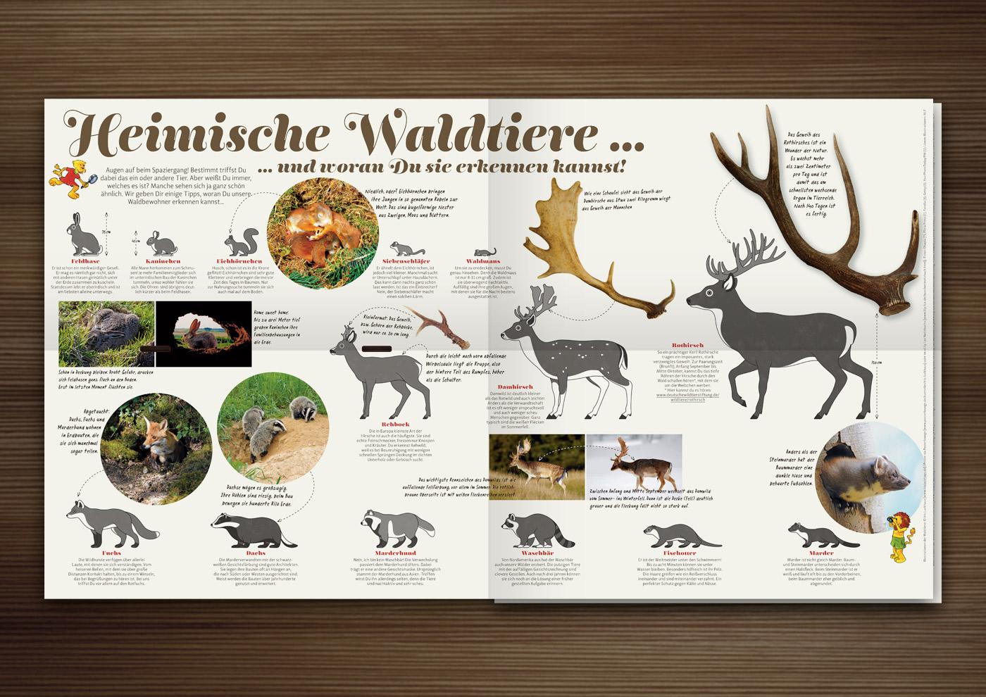 Heimische Waldtiere und wie Du sie erkennst mit Form, Zeichnung und Habitus von red fox, badger, stone marten, fish otter, raccoon, raccoon dog, fallow deer, roe deer, red deer, squirrel, dormouse, wood mouse, rabbit, hare, hedgehog and wild boar im Waldstück-Magazin der Niedersächsischen Landesforste