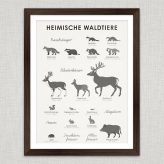 Art Prints | Identification Sheets with Forest Animals