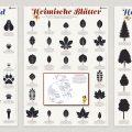 Lernposter mit Baumblättern, Tierspuren, Flugvögeln und Baumformen für die Waldpädagogik der Niedersächsischen Landesforsten