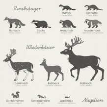 Identifying Forest Animals