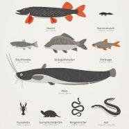 Heimische Wassertiere