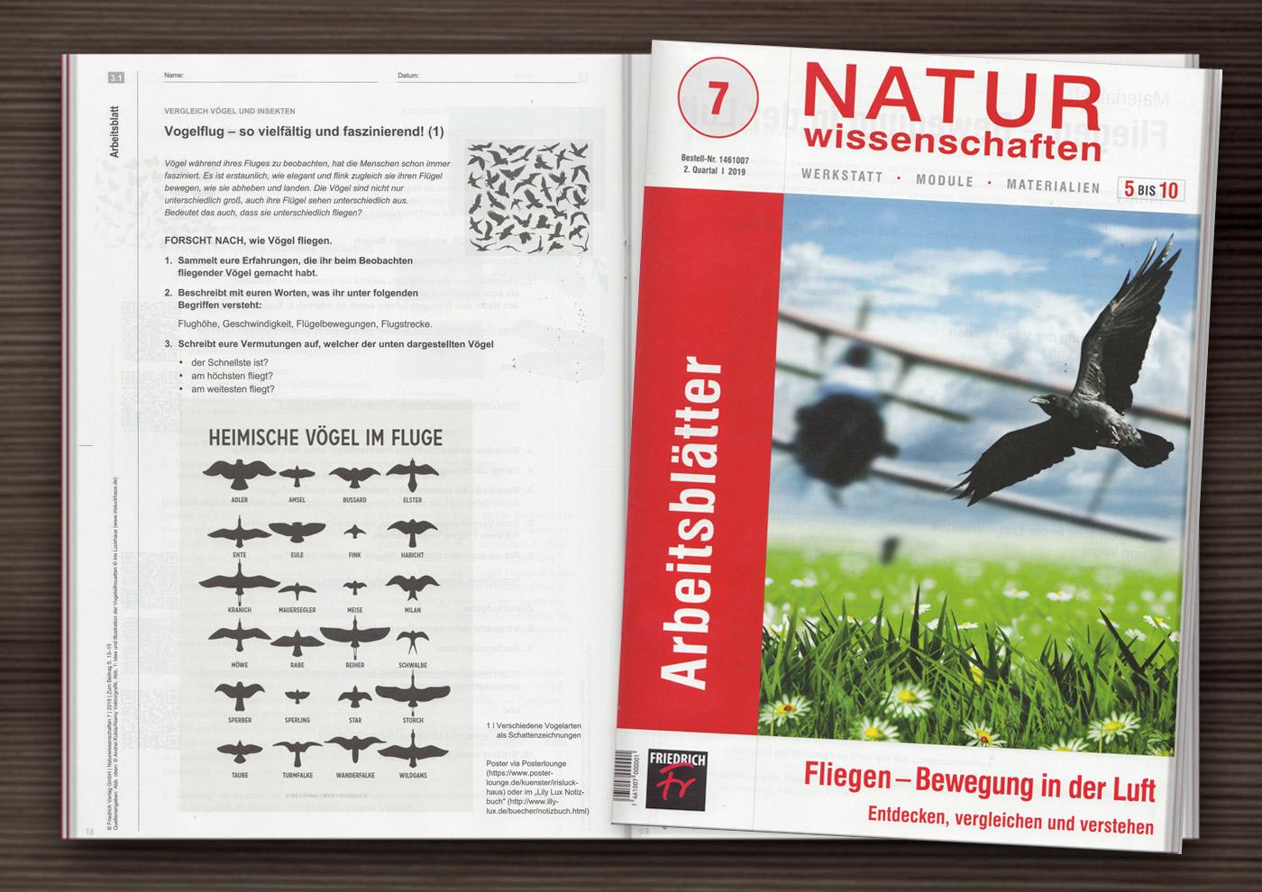Vogelsilhouetten auf einem Arbeitsblatt zum Vogelflug in den Unterrichtsmaterialien Naturwissenschaften zum Thema Fliegen – Bewegung in der Luft vom Friedrich Verlag
