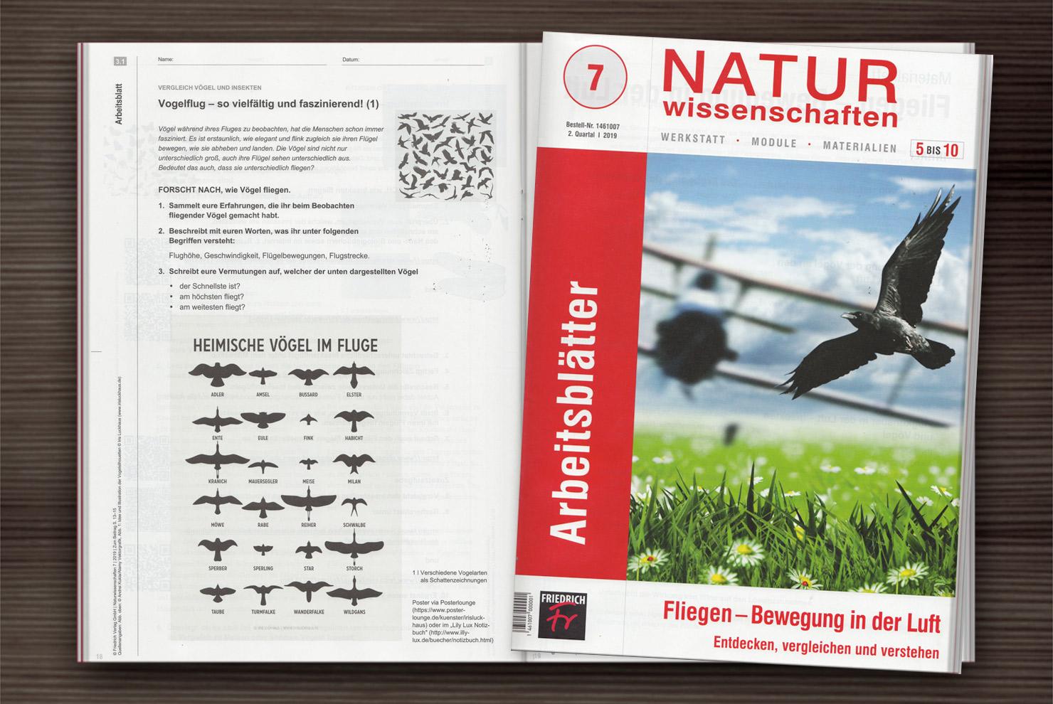 Vogelsilhouetten als Arbeitsblatt im Unterrichtsmaterial vom friedrich Verlag Naturwissenschaften