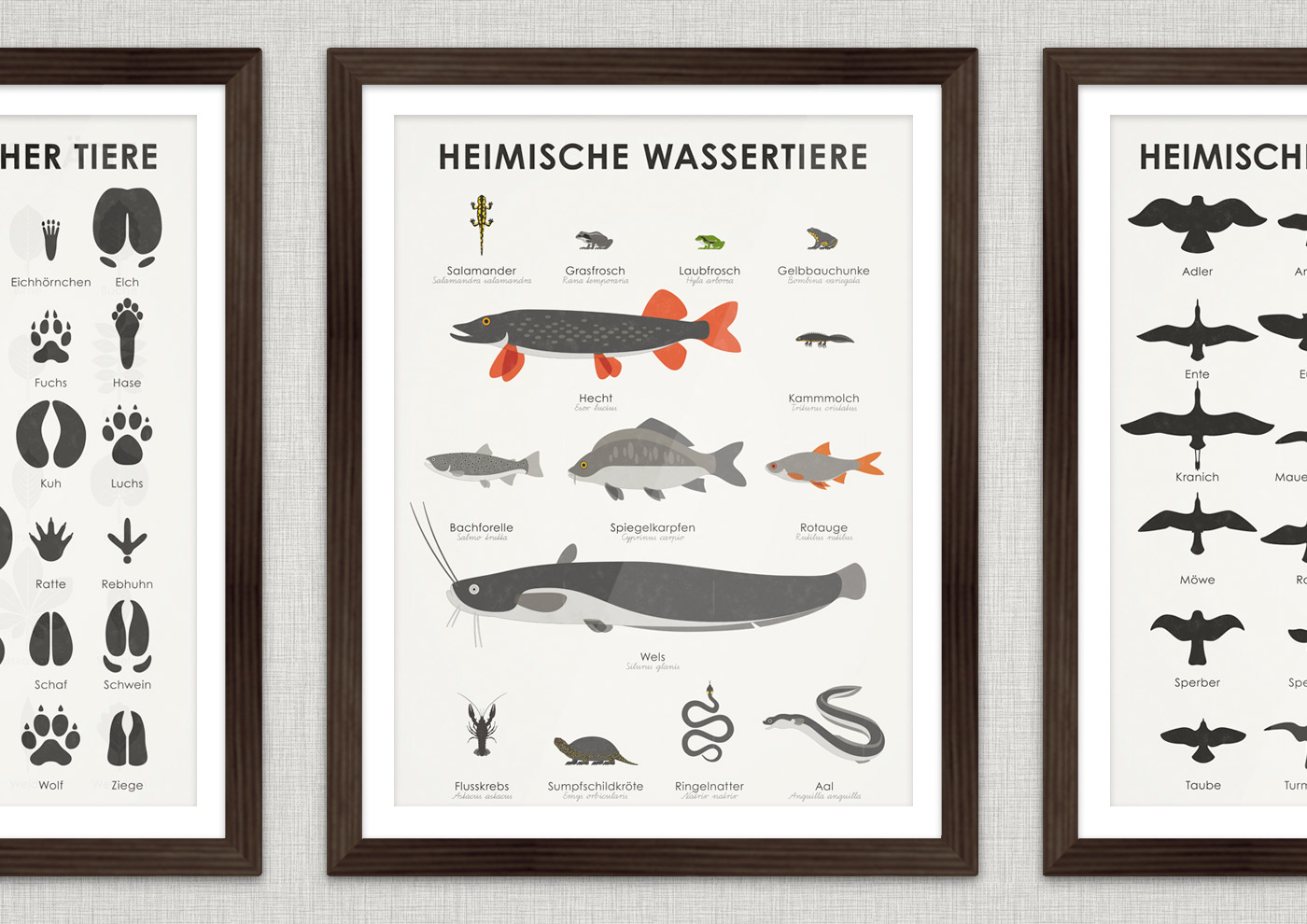 Lernposter, Schautafel oder Infografik zum Bestimmen der Form, Zeichnung und Habitus verschiedener im und am Wasser lebender heimischer Tiere, Fische, Amphibien und Reptilien wie Bachforelle, Spiegelkarpfen, Aal, Rotauge, Wels, Hecht, Flusskrebs, Sumpfschildkröte, Ringelnatter, Salamander, Kammmolch, Grasfrosch, Laubfrosch und Gelbbauchunke erkennen und bestimmen lassen