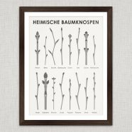 Art Prints | Identification Sheets with Tree Shoots