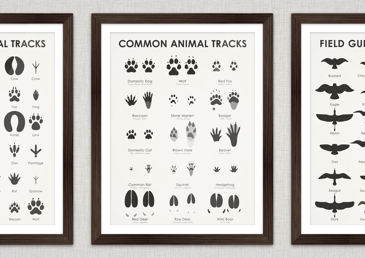 Together with professional track reader Stefanie Argow (Hidden Tracks), I'm currently working on an extended and more detailed version of my simplified animal tracks. So far, I've drawn tracks of front and hind foot, paw or hoof of beaver, badger, squirrel, rabbit, dog, cat, hedgehog, roe, fox, deer, marten, rat, racoon, wild boar and wolf.
