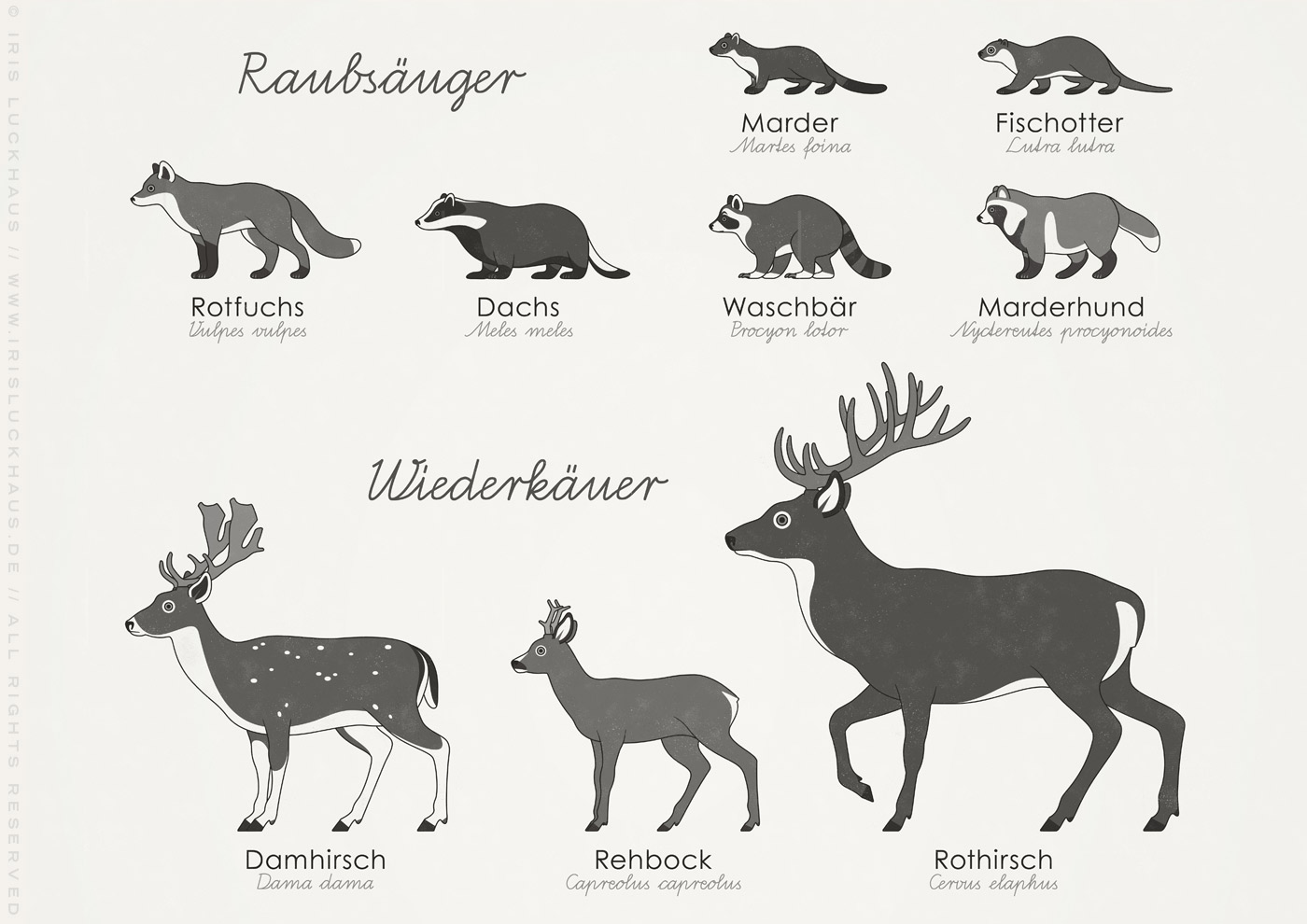 Lernposter, Schautafel oder Infografik zum Bestimmen der Form, Zeichnung und Habitus verschiedener heimischer Waldtiere wie Dachs, Damhirsch, Eichhörnchen, Fischotter, Fuchs, Hase, Igel, Kaninchen, Marder, Marderhund, Rehbock, Rothirsch, Siebenschläfer, Waldmaus, Waschbär und Wildschwein erkennen und bestimmen lassen.