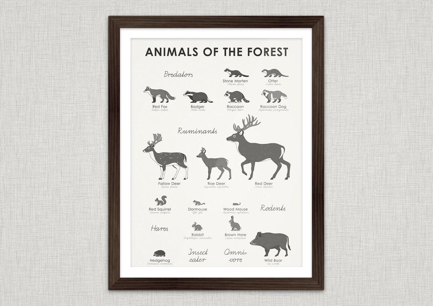 A practical infographic sheet that helps you to easily identify, learn and remember typical looks, marking and habit of forest animals such as red fox, badger, stone marten, fish otter, raccoon, raccoon dog, fallow deer, roe deer, red deer, squirrel, dormouse, wood mouse, rabbit, hare, hedgehog and wild boar.
