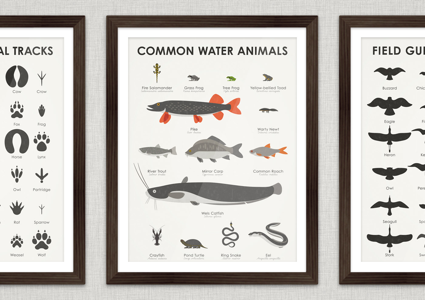 A practical infographic sheet that helps you to identify, learn and remember the typical looks, marking and habit of animals that live in and by the water (fishes, reptilia and amphibia), such as fire salamander, grass frog, tree frog, yellow-bellied toad, pike, warty newt, river trout, mirror carp, common roach, wels catfish, crayfish, terrapin, ring snake and eel.