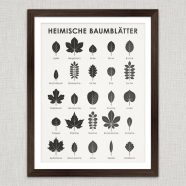 (Deutsch) Art Prints | Tree Leaves Wall Chart Poster