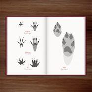Spuren lesen – Geschichten, die uns die Fährten der Tiere erzählen