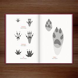 Spuren lesen – Was uns die Fährten der Tiere erzählen