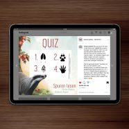 Raffle | Quiz for »Spuren lesen« by Argow and Fokken