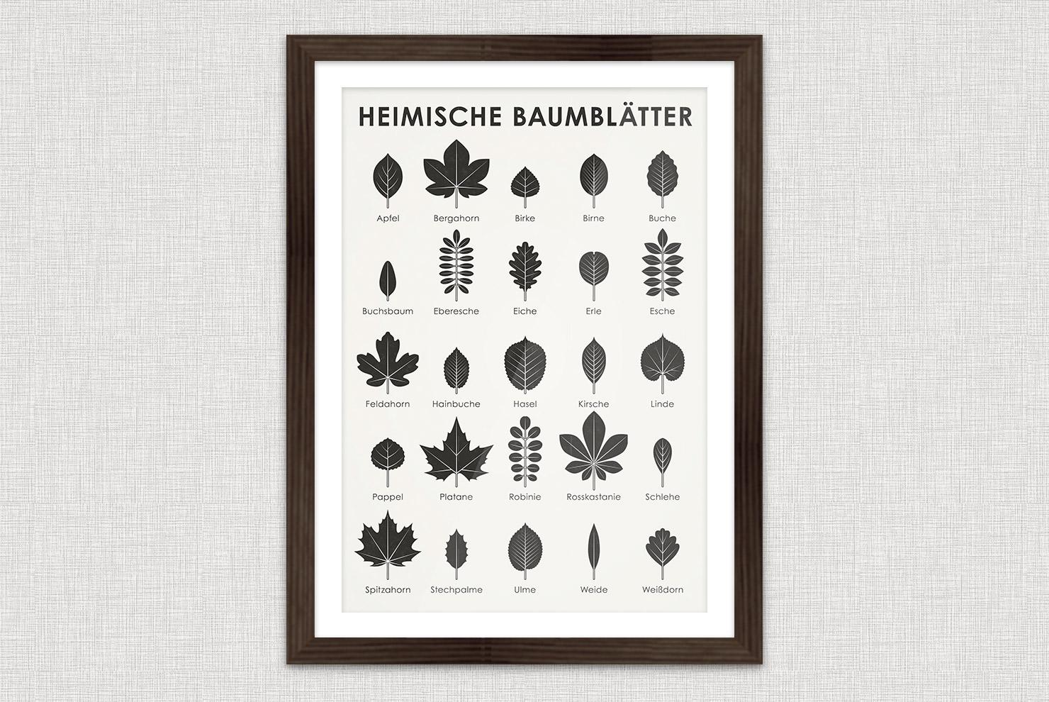 Poster mit einer gezeichneten Infografik zur Bestimmung heimischer Blattformen und der Blätter von Bäumen wie Apfelbaum, Bergahorn, Birke, Birnbaum, Buche, Buchs, Eberesche, Eiche, Erle, Esche, Feldahorn, Hainbuche, Hasel, Linde, Pappel, Platane, Robinie, Kastanie, Schlehe, Spitzahorn, Stechpalme, Ulme, Weide oder Weißdorn im Retro-Schulbuch-Stil