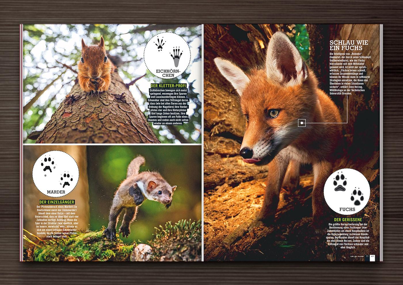 Trittsiegel bzw- Tierspuren von Hiddentracks und Iris Luckhaus in Welt der Wunder Magazin