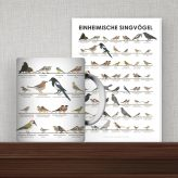 Art Prints | Wall Chart with European Songbirds