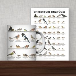 Products Songbirds