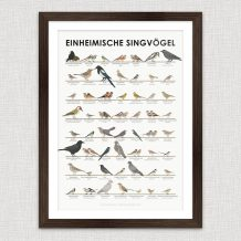 Art Print Songbirds