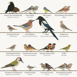 European Songbirds