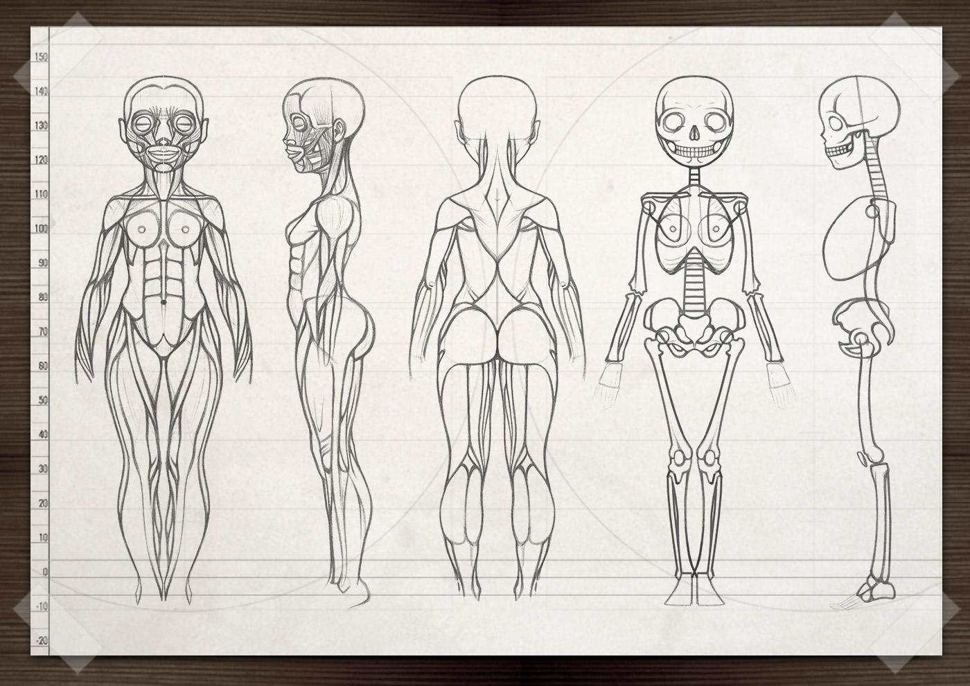 Characterdesign für Lily Lux mit Ansicht vorn, halbvorn, Seite, halbhinten und hinten